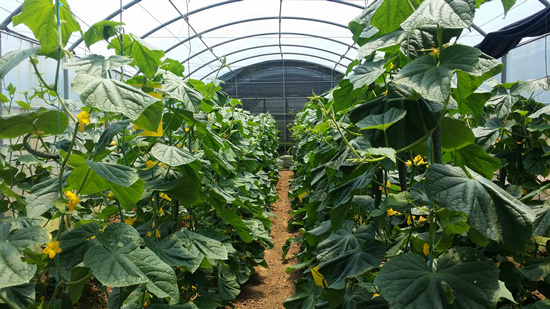 Chinese Agricultural Mission Greenhouse Plastics Hand Over Ceremony Image