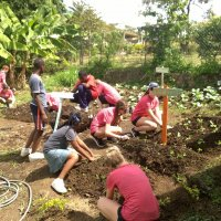 School Gardening Collaboration
