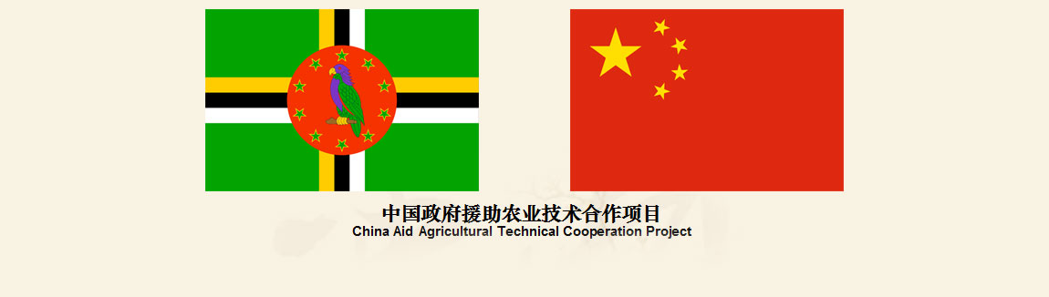 China Aid Agricultural Technical Cooperation Project Description