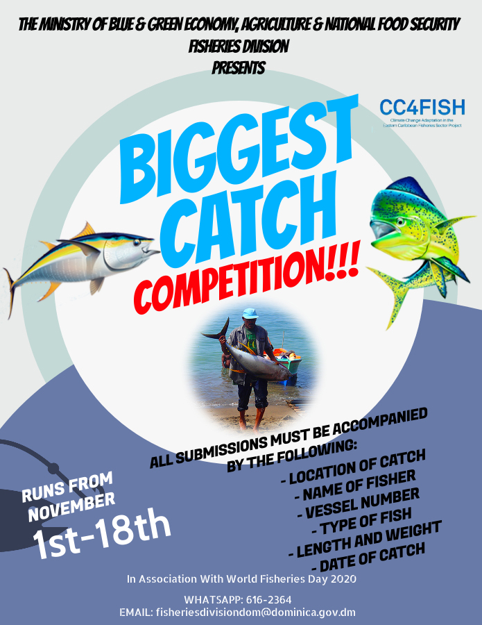 Biggest Catch Competition